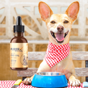 A picture of a dog and pet CBD oil