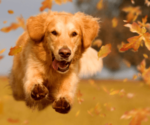 A dog running through the leaves